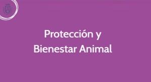 Proteccion y Bienestar Animal, Podemos Cabildo de Tenerife